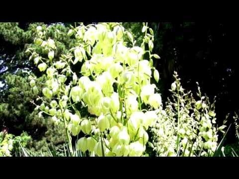 Комнатное растение мирт. Уход за миртом, фото. Цветы мирт