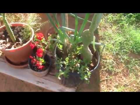 food and plants of organic magic