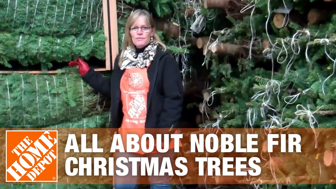All About Noble Fir Christmas Trees - The Home Depot - YouTube