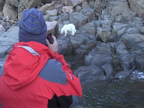 Arctic Travellers View Polar Bear Cub Up-Close in Summer