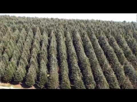 Meet Your Neighbor...Bottomley Farms Christmas Trees