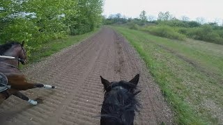 Gallop Sparing with FAST Speed average 55 Km/H. GOPRO 5