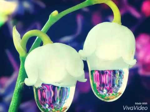Les Plus Belles Fleurs De Monde Youtube