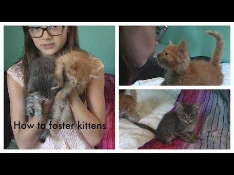 How to Foster Kittens | Cutest Kittens Ever | Fun with Fiona | Fiona Frills