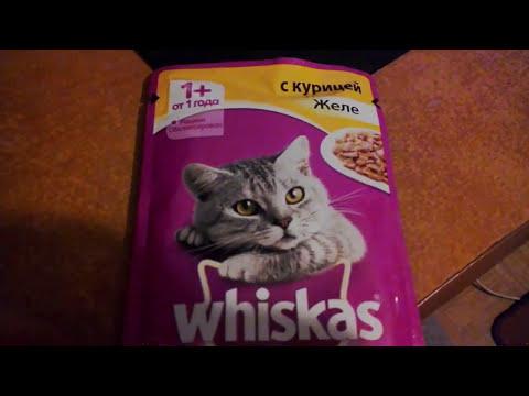 Вискас для котят: сухой и влажный корм, состав и качества