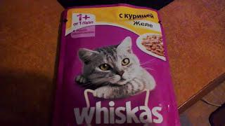 Whiskas для котят,чем кормить,чем поить?!
