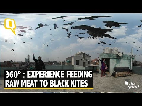 360° Video: Here's Why Old Delhi Residents Feed Meat to Black Kites | The Quint