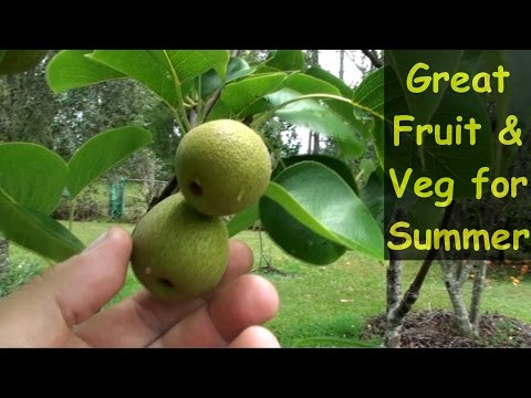 Great Fruit & Veg For Summer in my Subtropical Garden