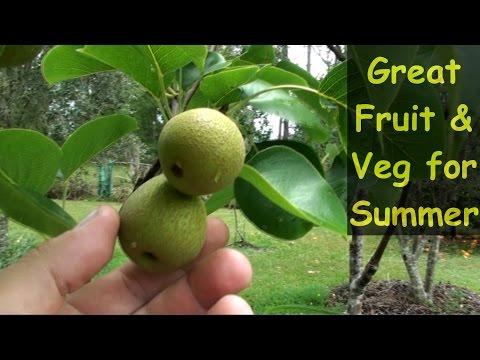 Great Fruit & Veg For Summer in my Subtropical Garden