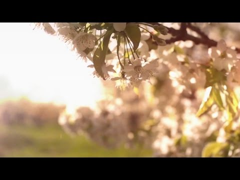 HAVASI — Spring Wind | Cultural Bridge Symphony (Official Video)