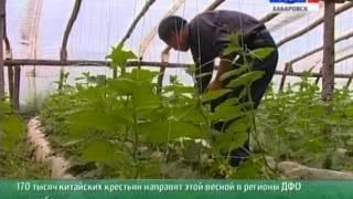 Вести-Хабаровск. Рабочая сила из провинции Хэйлунцзян
