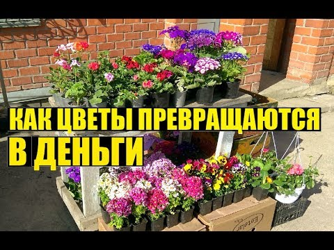 Торгую на рынке цветами. Сколько заработал за рынок?
