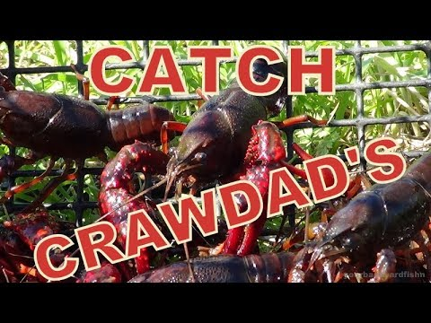 THE  ' SIMPLEST WAY ' ...  TO CATCH CRAWDADS !