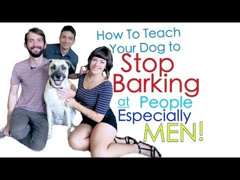 How to Train your Dog Not to be Scared