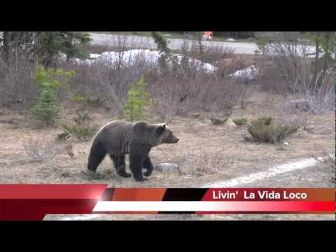 Man-Eating GRIZZLY BEAR! - YouTube