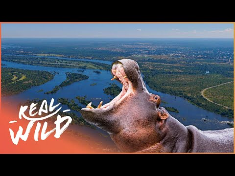 The Beautiful Habitants Of The Zambezi River! | Zambezi: Force Of Life | Real Wild