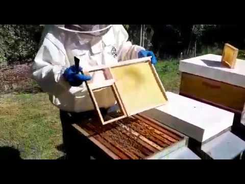 Sciamatura delle api: come evitarla