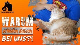 🔥Warum schläft meine Katze bei mir? Warum liegen Katzen so gerne bei/ auf uns Menschen?