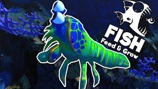 THÁNH PHỒNG TÔM!??| Feed and Grow: FISH[22]