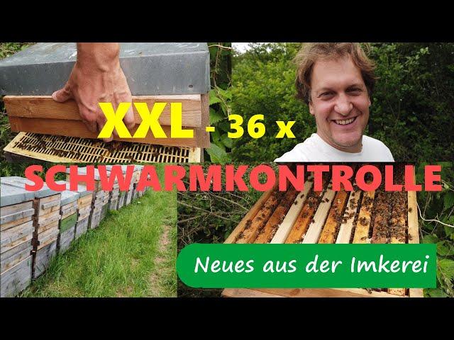 Schwarmkontrolle Mai 2020 - 36 Bienenvölker am Stück - Neues aus der Imkerei