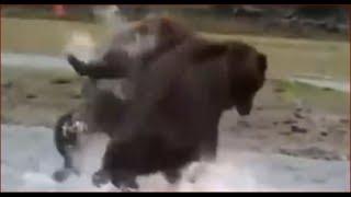 Медведь Рекомендации Красноярского заповедника Столбы рыбалка охота тайга лес природа в поход грибы