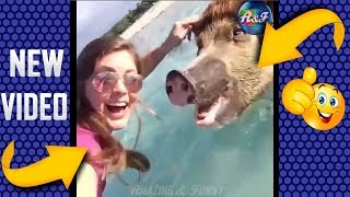 Funny Videos 2018 • Highlights of Animals • Very Funny Animals
