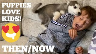 The Amazing Growth In Friendship With My Husky Puppy & Kids Is The Cutest Thing Ever! [UNSEEN CLIPS]
