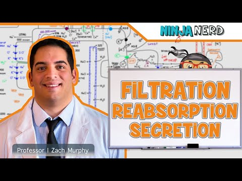 Renal | Filtration, Reabsorption, And Secretion | Overview