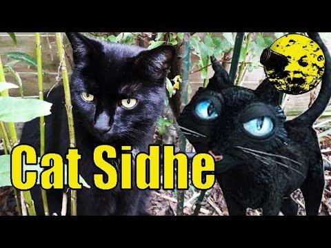 Coraline Cat Theory