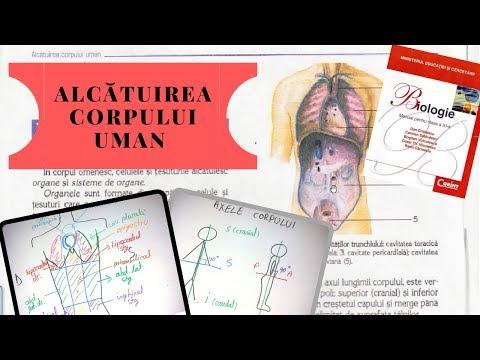 Colonne Vertèbrale : (Vertèbre Cervicale) 3D from YouTube · Duration:  2 minutes 58 seconds