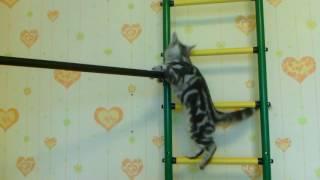 Что-то кошка делает когда хозяина нет дома