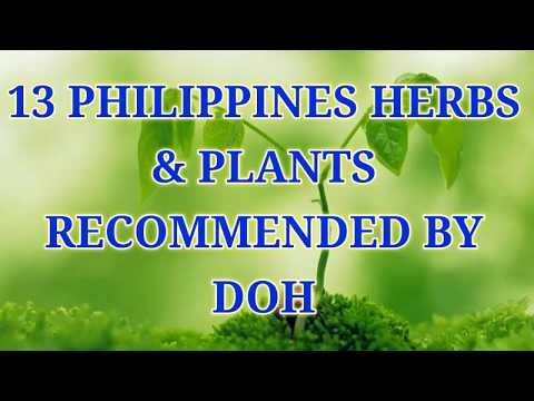 13 PHILIPPINES HERBS & PLANTS RECOMMENDED BY DOH