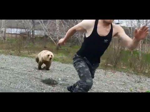 На Камчатке медведь погнался за любопытным туристом