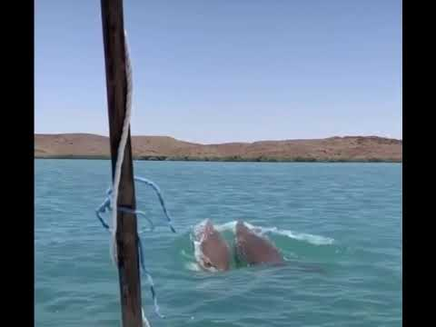 TpB Pilbara Dugong Hunting Christmas Meat Sesh 🚳