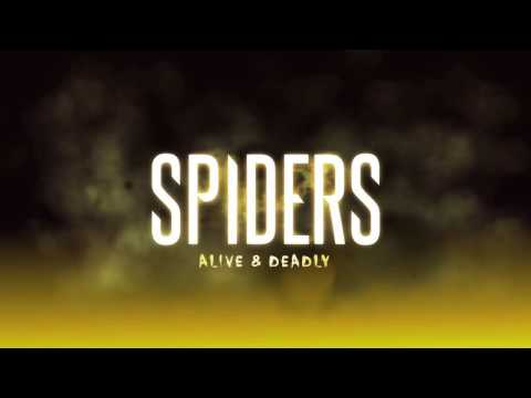 Spiders - Alive and Deadly exhibition at the Australian Museum