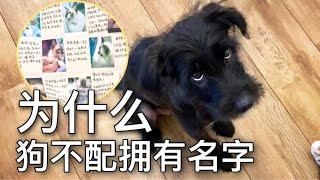 【李喜貓】愛心網友為貓手繪成長日記,狗沒名字氣得直翻白眼:歧視單身狗?