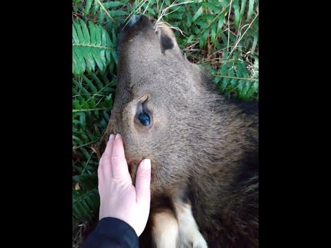 Western Washington Elk Hunt 2019