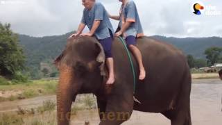 Elephant Is Finally Free After Years Of Giving Rides