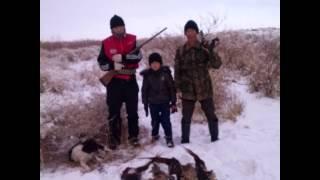 охота фазан фото 2013 декабрь31