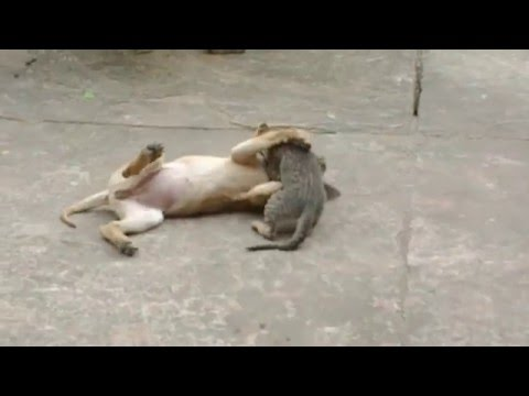 Đại chiến chó mèo
