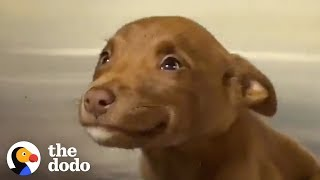 Download This Adorable Puppy Wouldn't Stop Smiling in Her Shelter Kennel | The Dodo Mp3 and Videos