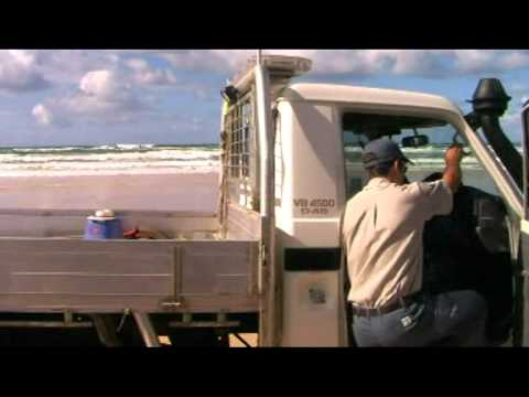 Vanishing Icon: The Jennifer Parkhurst Fraser Island Dingo Story