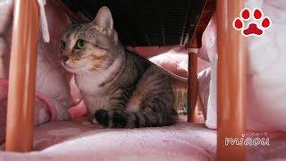 キャティーマンの夢炬燵は3年持たないのか?【瀬戸の猫部屋日記】Does Catty man's pet Kotastu last for three years?