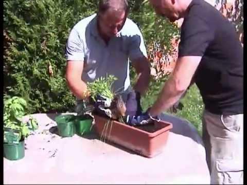 Faire une jardini re de plantes aromatiques et - Faire une jardiniere ...