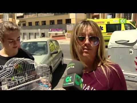 Noticias TV CANARIA 14 Abril 2016