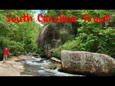 Trout Fishing South Carolina's Little Eastatoe Creek