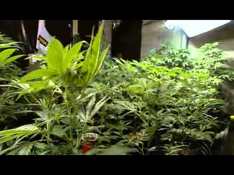 Download The Union: The Business Behind Getting High (2007)