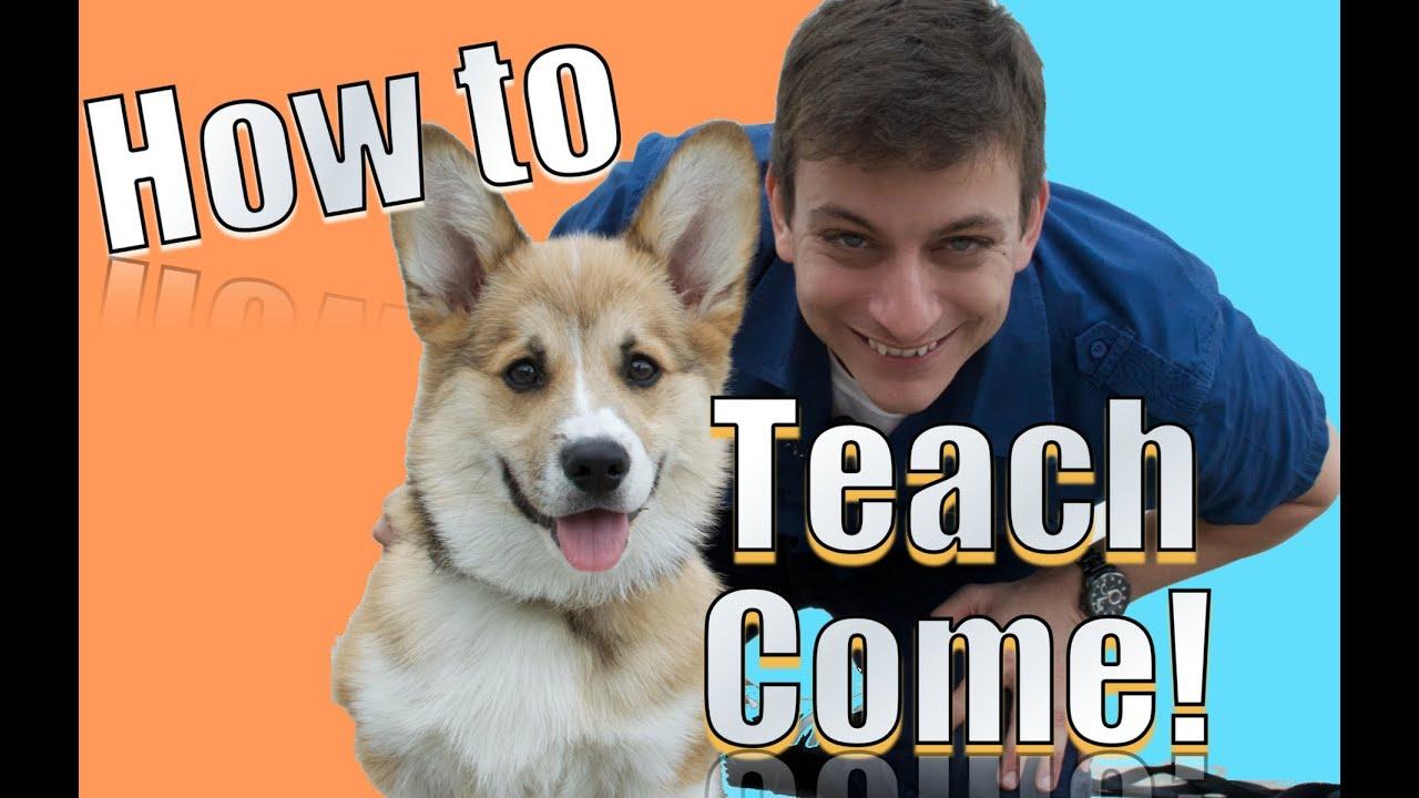 How to Train a Dog to Come How to Train a Dog to Come new picture