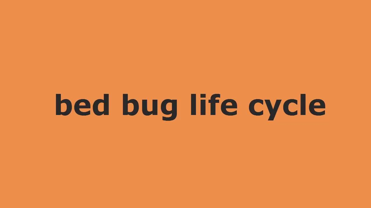 Baby bed bugs - Bed Bug Life Cycle