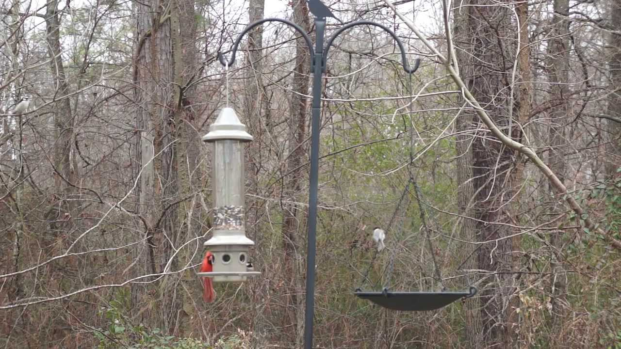 bird with image unlimited squirrel pole proof feeders for classic cozy wild full unique birds feeder